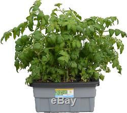 Hydroponic Plant Growing System DWC Self-watering BUBBLER Cloner #4 H2OToGro